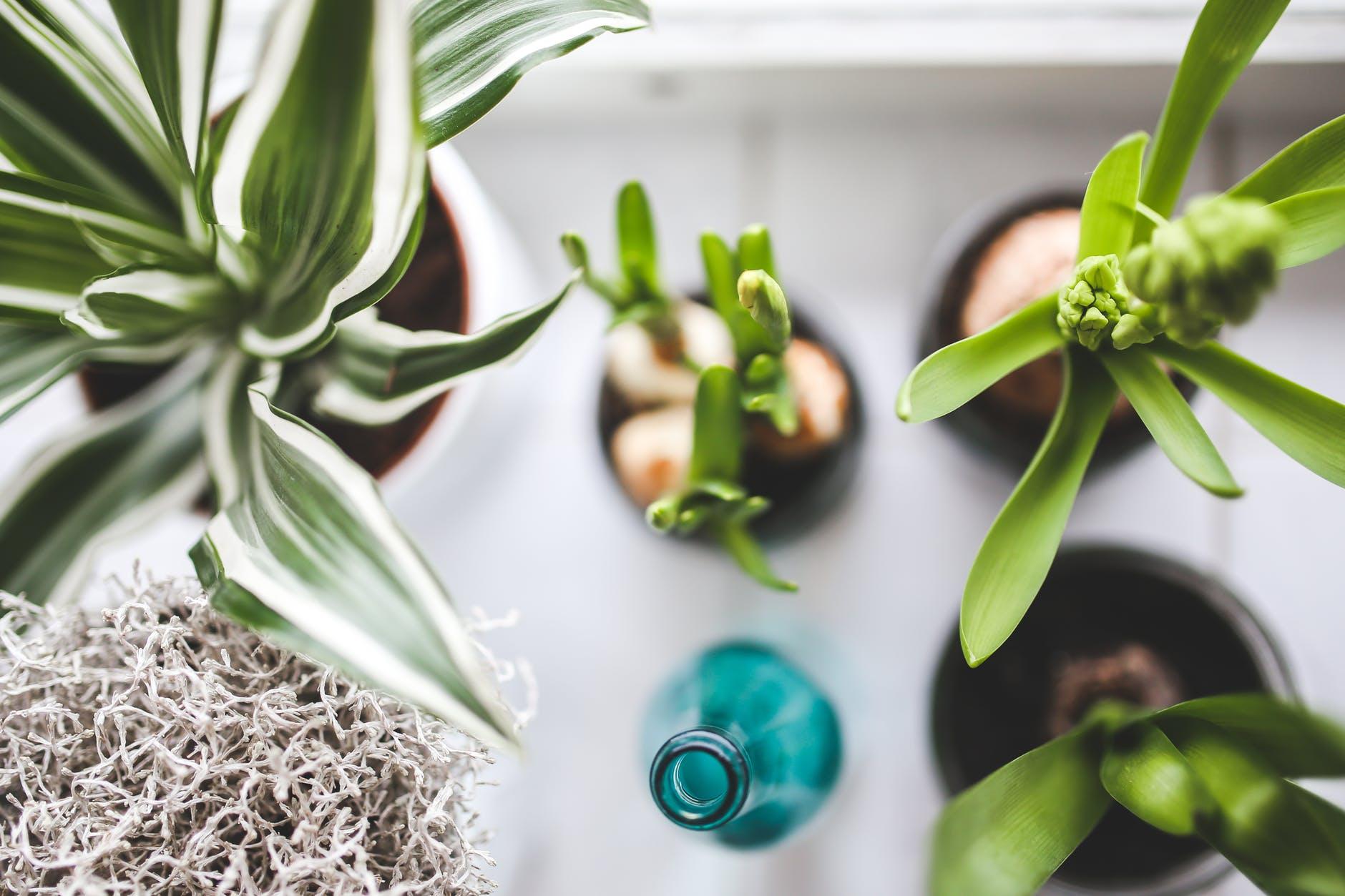 3 sastojaka koji će kućne biljke vratiti u život