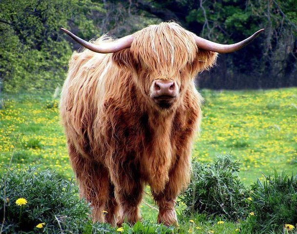 Stereotipno življenje ili kako uhvatiti bika za rogove?
