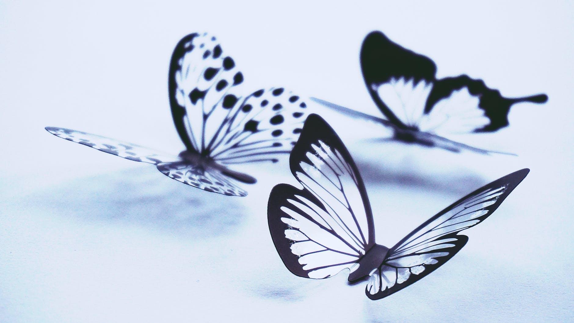 Viđate mnogo leptira? Znate li što vam to govori?