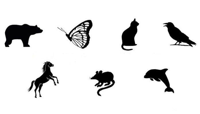 Čarobni test: U koju životinju bi se voljeli pretvoriti?