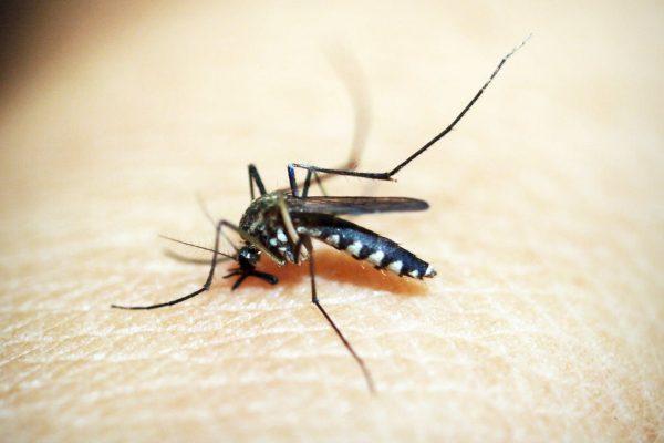 Najbolja prirodna sredstva za zaštitu od komaraca