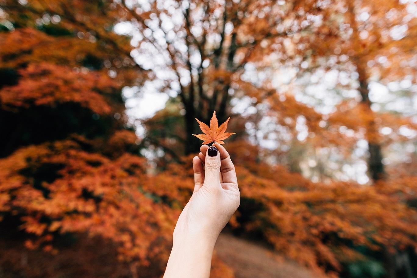 O jednoj jeseni