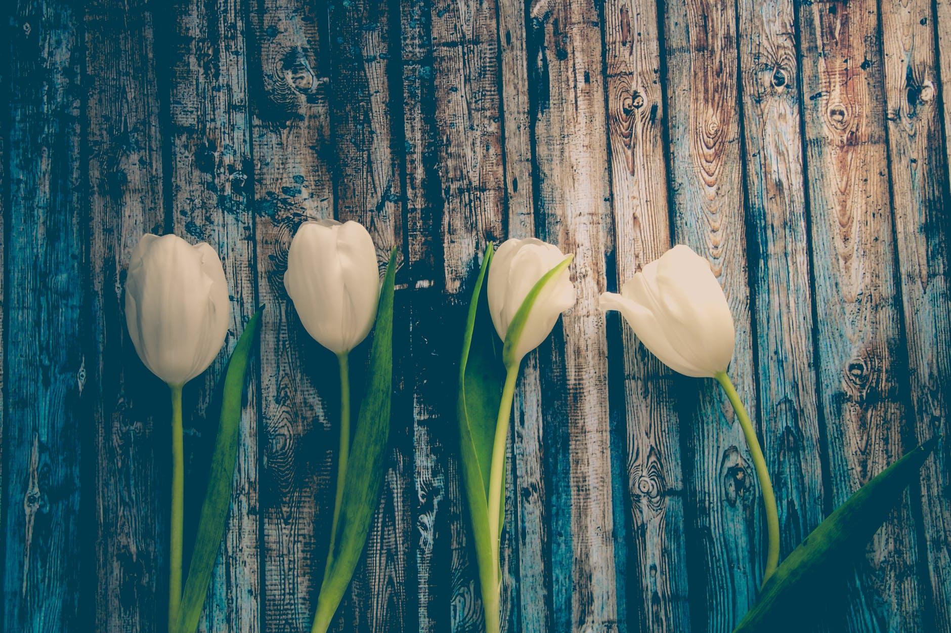 TEST: Odaberite svoj omiljeni tulipan i primite poruku snage i vodstva!