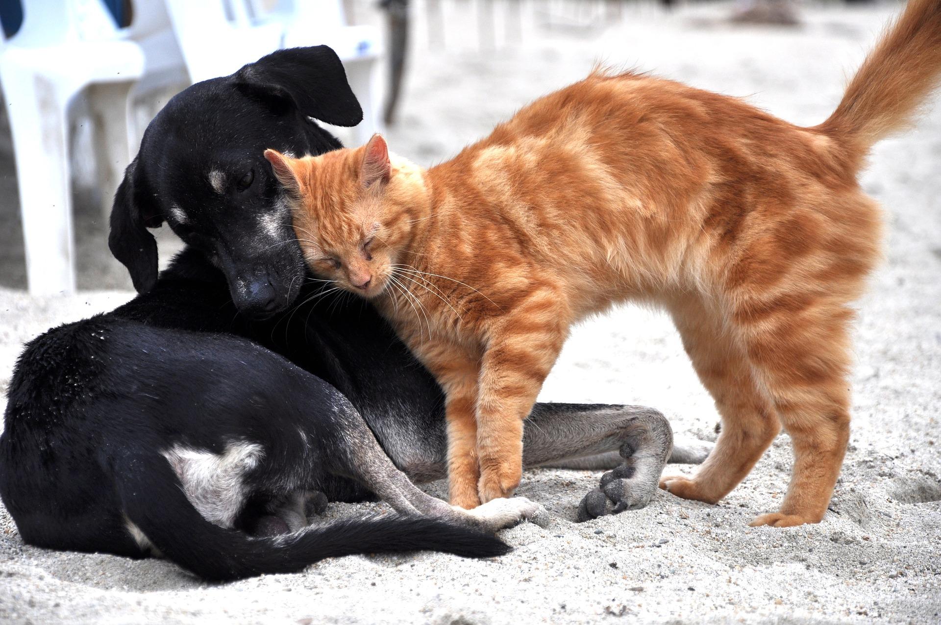 Potreba za psom ili mačkom ima duboko kozmičko značenje