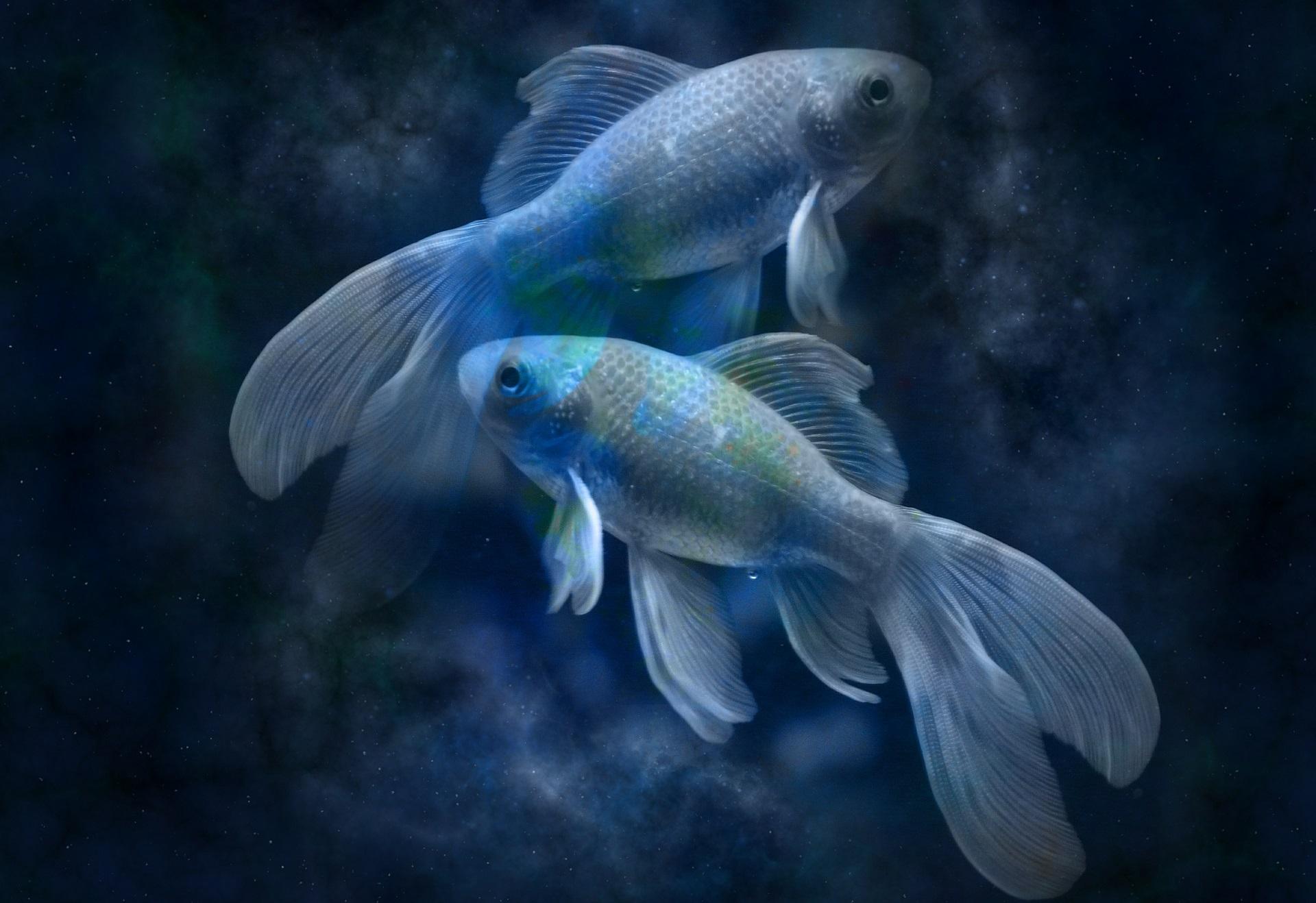Veliki godišnji horoskop po znakovima, Nade Radanović: Ribe